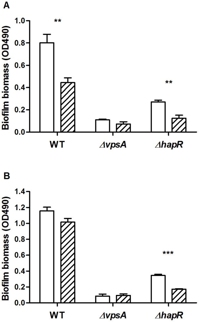 Biofilm grazing assays of V. cholerae A1552, Δ vpsA and Δ hapR strains. Grazing resistance of early (A) and late (B) biofilms was determined by comparing the biofilm biomass of V. cholerae strains in the absence (open) and in the presence (hatched) of R. nasuta and A. castellanii . Error bars represent standard deviation. The experiment was run in replicates of four and repeated twice.