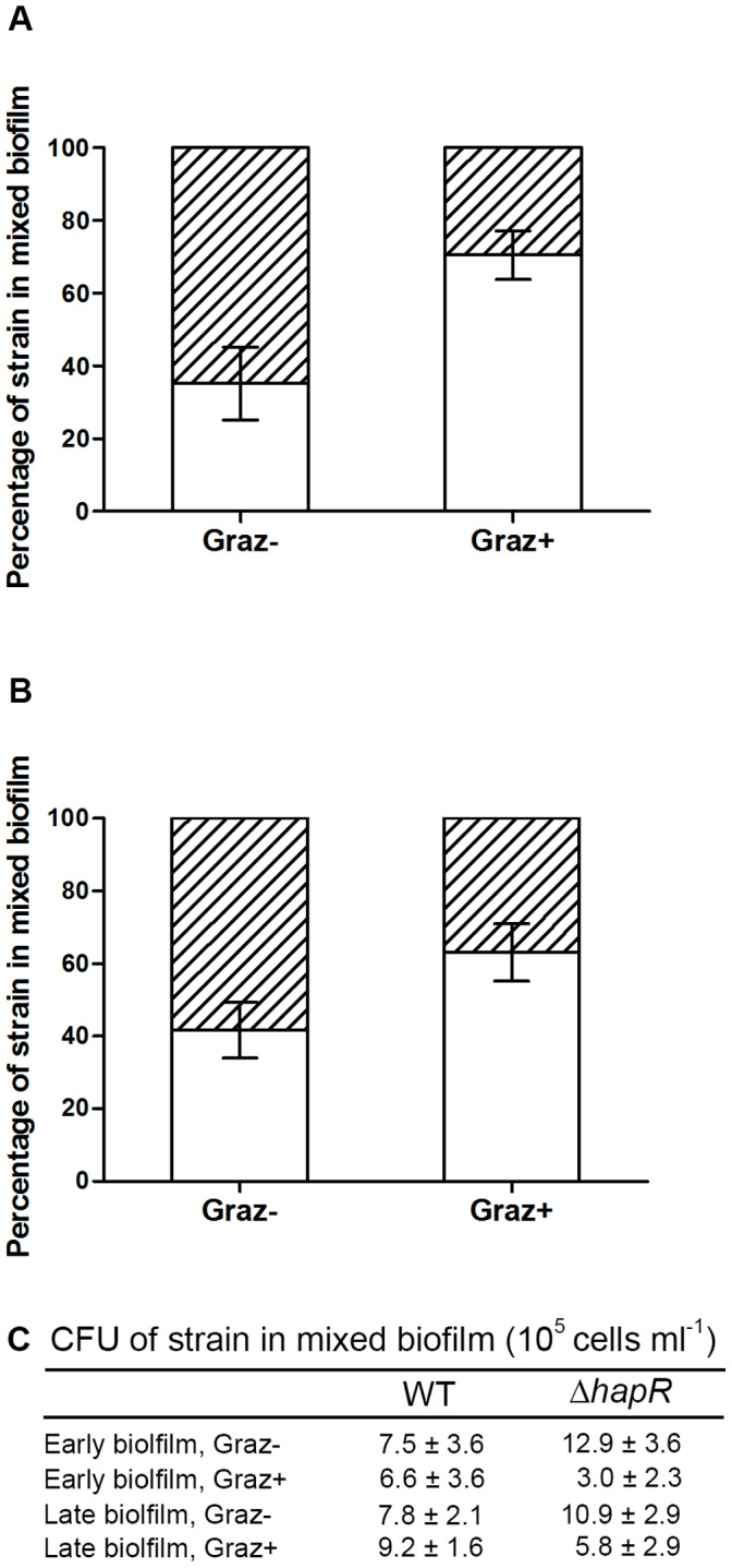 Biofilms of mixed V. cholerae A1552 (open) and Δ hapR strains (hatched) were exposed to predation. The relative fitness of each strain in early (A) and late (B) biofilms of mixed V. cholerae strains was measured by enumeration of CFU (C). Error bars represent standard deviation. Experiments were run in replicates of four and repeated twice.