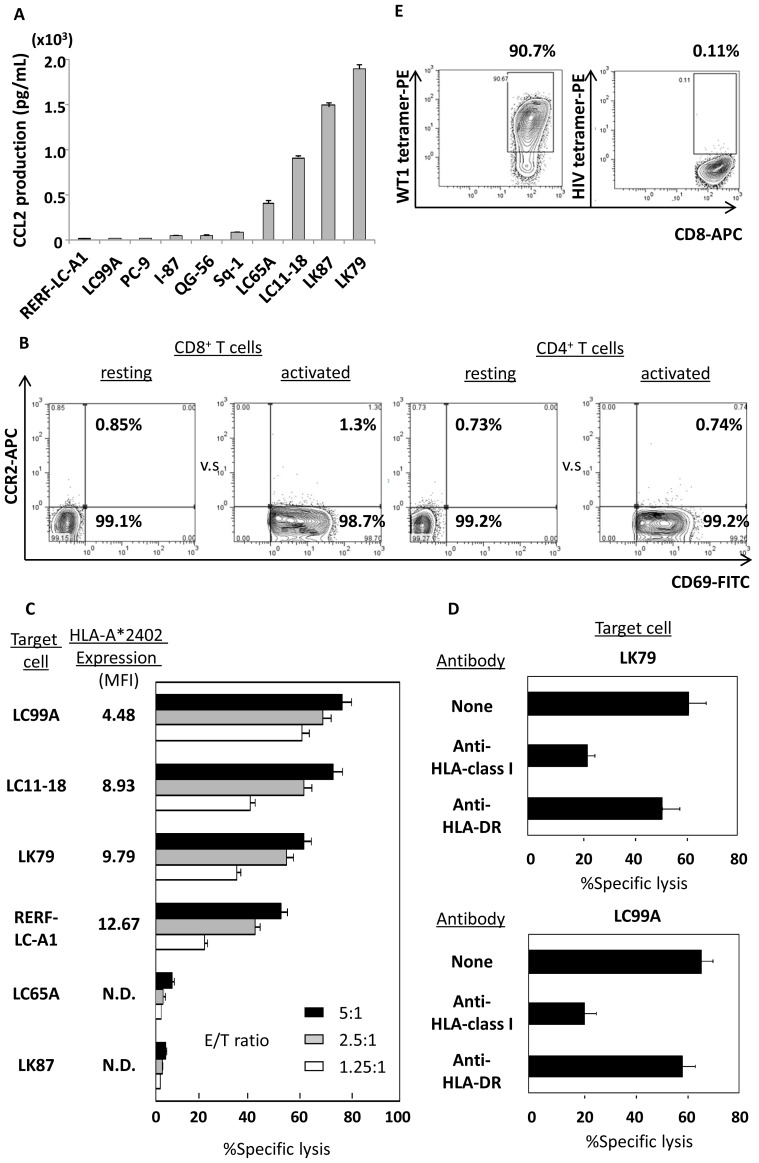 Human lung cancer cells produce variable amounts of CCL2 and show sensitivity to cytocidal activity mediated by CD8 + T cells genetically engineered to express WT1-specific TCR. (A) ELISA assay revealed that 10 human lung cancer cell lines examined produced various amounts of CCL2 in the culture supernatant. Error bars represent SDs. (B) Similarly to transduction of the WT1-specific TCR gene, CD69-positive CD8 + and CD4 + T cells activated using IL-2 and OKT-3 rarely displayed cell-surface CCR2. A representative example of 5 cases is shown. (C) CD8 + T cells gene-modified to express HLA-A*2402-restricted and WT1 235–243 nonamer-specific TCR successfully displayed cytocidal activity against lung cancer cell line cells in a HLA-A*2402-restricted manner, as determined by standard 51 Cr release assay. Error bars represent SDs. MFI indicates mean fluorescence intensity, N.D indicates less than detectable. (D) Such anti-lung cancer activity (vs. LK79 and LC99A) was inhibited by anti-HLA class I framework mAb (clone w6/32), but not by anti-HLA-DR mAb (clone L243), again illustrating that the introduced WT1-specific TCR-mediated tumoricidal activity was HLA-class I-restricted. Error bars represent SDs. (E) Tetramer assay showed that effector cells used in these experiments were positive for WT1/HLA-A*2402-tetramer. HIV/HLA-A*2402 tetramer was employed as a negative control.