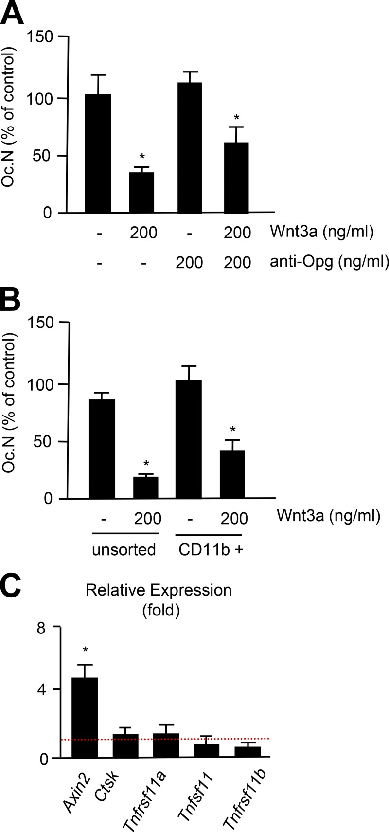 Opg-independent inhibition of osteoclastogenesis by Wnt3a. (A) Quantification of TRAP-positive multinucleated cells generated after 7 d of culture in the presence of Wnt3a and/or an anti-Opg antibody. Error bars represent mean ± SD ( n = 6). Asterisks indicate statistically significant differences compared with controls. (B) Quantification of TRAP-positive multinucleated cells generated from unsorted or CD11b-purified bone marrow cells after 7 d of culture in the presence of Wnt3a. Error bars represent mean ± SD ( n = 6). Asterisks indicate statistically significant differences compared with controls. (C) qRT-PCR expression analysis of the indicated genes in CD11b-purified bone marrow cells after treatment with 200 ng/ml Wnt3a for 6 h relative to untreated cells. Error bars represent mean ± SD ( n = 4). Asterisks indicate statistically significant differences compared with controls.