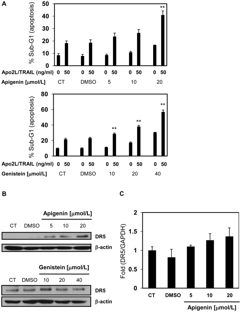 Apigenin enhances Apo2L/TRAIL-induced apoptosis via upregulation of DR5. A, DU145 cells were treated with various concentrations of each flavonoid for 24 hr, followed by treatment with or without 50 ng/ml Apo2L/TRAIL. After 24 hr, the sub-G1 population of the cells was measured using flow cytometry. B, DU145 cells were treated with the indicated concentrations of each flavonoid for 24 hr and harvested. The lysates were analyzed using Western blotting with an anti-DR5 antibody. β-actin was used as a loading control. C, DR5 mRNA was quantified by real-time RT-PCR and normalized by GAPDH. Columns, mean; bars, SD (n = 3). ** P