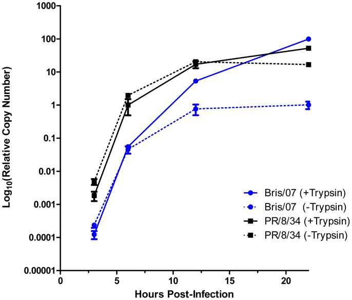 Replication kinetics of influenza virus assessed by qRT-PCR. Virus replication was assessed in the absence or presence of TPCK-trypsin (1 µg/mL). Virus (1000 TCID 50 in 100 µL) was placed into a well of a 96-well plate. After incubation for 1 h at 37°C, a suspension of MDCK-London cells (30,000 in 100 µL) was added. At the indicated times, experimental samples were prepared using SPR and subjected to qRT-PCR. The RNA copy numbers were normalized to the mean value observed for A/PR/8/34 at 6 hours in the presence of TPCK-trypsin. Each point represents the mean ± SEM (n = 3).