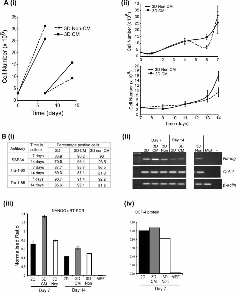 Cultispher-S microcarriers support expansion of undifferentiated SHEF3 hESCs. 3 × 10 6 SHEF3 hESCs were seeded onto Cultispher-S microcarriers in KO-DMEM supplemented with 20% (v/v) KO-SR and 4 ng/mL FGF-2 in the presence (3D CM) or absence (3D Non-CM) of MEF conditioned medium (CM). Cells were cultured for 7 days, passaged and then cultured for a further 7 days. A: (i) Cell numbers plated and recovered at each passage for each condition are presented. (ii) The mean number of viable cells attached to microcarriers (±SD) are shown for each condition for the culture periods d0–d7 (upper panel) and d7–d14 (lower panel). B: Assessment of markers of pluripotency. (i) Expression of SSEA4, Tra-1–60 and Tra-1–85, were determined by flow cytometry. 2D indicates hESCs controls maintained in 2D culture on MEF plus FGF-2. RNA and protein were extracted from hESCs cultured in 2D or 3D conditions for the times indicated and expression of OCT-4 and NANOG determined by (ii) semi-quantitative RT-PCR; (iii) quantitative RT-PCR normalized to β-actin (±SD) or (iv) immunoblotting, normalized to SHP-2.