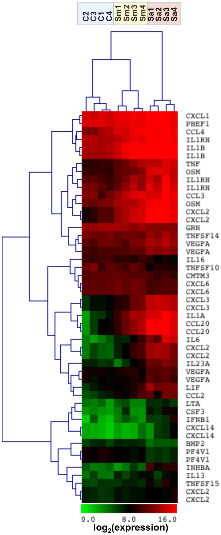 Hierarchical clustering of cytokine and chemokine genes by M. abscessus . Neutrophils were stimulated with M. abscessus (Sm; yellow shading ), or S. aureus (Sa; red shading ) for 2 hours, and gene expression was determined compared to non-stimulated neutrophils (C; blue shading ). Tree spacing indicates linkage distance. Highly expressed ( red ) and low expressed ( green ) genes are indicated from 4 different neutrophil donors.