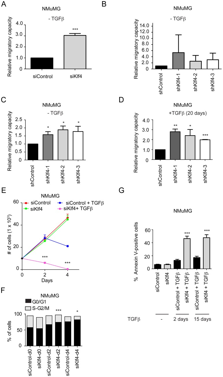 Klf4 inhibits cell migration and promotes cell survival and proliferation during TGFβ-induced EMT. ( A ) siRNA-mediated ablation of Klf4 results in an increase in NMuMG cell migration even in the absence of TGFβ as determined by scratch wound closure assays (see pictures in Figure S3A ). ( B ) Stable shRNA-mediated depletion in NMuMG cells using three different shRNA sequences specific for Klf4 results in moderately increased cell migration as determined by scratch wound closure assays (see pictures in Figure S3B ). ( C ) Stable shRNA-mediated depletion of Klf4 expression in NMuMG cells results in increased cell migration as determined by trans-well migration assays using 20% FBS as a chemo-attractant in the absence of TGFβ. ( D ) Stable shRNA-mediated depletion of Klf4 expression in NMuMG cells previously treated for 20 days with TGFβ results in increased cell migration as determined by trans-well migration assays using 20% FBS as a chemo-attractant. ( E ) siRNA-mediated ablation of Klf4 expression during TGFβ treatment of NMuMG cells results in a significant decrease in cell numbers as compared to cells transfected with control siRNA, while the depletion of Klf4 has no effect on cell number in the absence of TGFβ. ( F ) NMuMG cells transfected with either control siRNA (siControl) or with siRNA against Klf4 (siKlf4) were treated with TGFβ for the days indicated. Cells were stained with propidium iodide (PI), and the percentages of cells in G0/G1 and S-G2/M phases of the cell cycle were determined by flow cytometry analysis. ( G ) NMuMG cells transfected with either control siRNA (siControl) or with siRNA against Klf4 (siKlf4) were treated with TGFβ for the days indicated, and the rates of apoptosis were determined by Annexin-V staining and flow cytometry. Note that in the 15 days experiment, cells were first treated with TGFβ for 13 days and then transfected with siRNA constructs. Statistical values were calculated using an unpaired/paired, two-tailed t-test and e