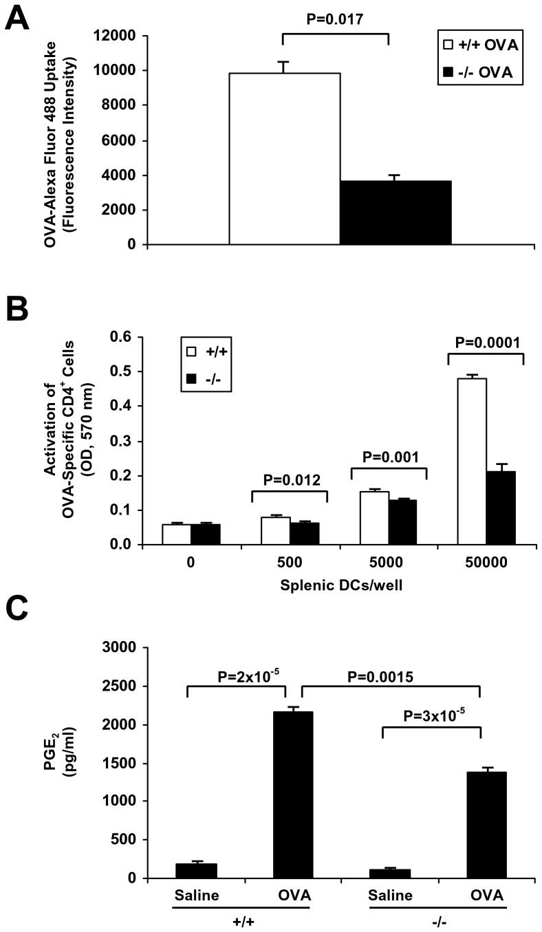 Effect of sPLA 2 -V deficiency on DC OVA uptake, presentation to OVA-transgenic T cells, and PGE 2  production. A.  Endocytosis of Alexa Fluor 488-labeled OVA (0.1 mg/ml) by BMDCs from sPLA 2 -V +/+  (+/+) and sPLA 2 -V −/−  (−/−) mice was assessed at 2 h by flow cytometry using a BD FACSCanto™ Flow Cytometry System with the mean fluorescence intensity (MFI) representing the amount of incorporated tracer by APC-CD11c+ cells ( n  = 4–5, each group).  B.  The antigen-presenting activity of splenic DCs in sPLA2-V-deficient mice in comparison to wild-type controls was assessed using CD4 +  T cells carrying the MHC class II restricted rearranged T cell receptor (TCR) transgene, Tg(DO11.10)10Dlo that react to OVA peptide antigen. Irradiated (3000 rad) splenic DCs from sPLA 2 -V +/+  (+/+) and sPLA 2 -V −/−  (−/−) mice were cultured overnight with OVA (1 mg/ml) at 37°C in 5% CO2; the splenic DCs (0–50000 DCs/well) were then incubated with CD4+ naïve T cells (1×106 T cells/well) isolated from OVA-TCR transgenic mice for 48 h in the absence or presence of OVA323-339 peptide (1 μg/ml).  C.  PGE2 production by BMDCs was assayed by EIA on d 7 in culture after incubation for 24 h with OVA (1 mg/ml) ( n  = 4–5, each group).