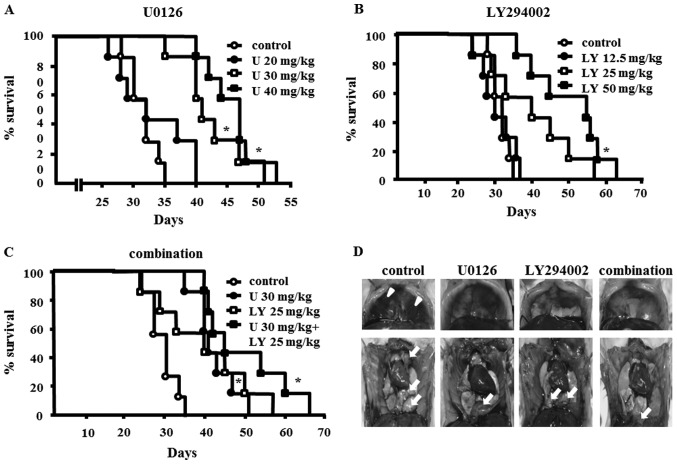 Effects of U0126 or LY294002 or the combination of U1026 and LY294002 on severe combined immunodeficiency (SCID) mice bearing EHMES-10 cells. (A–C) Survival times of EHMES-10 cell-bearing SCID mice treated with U0126, LY294002, or the combination of U0126 and LY294002. EHMES-10 cells (3×10 6 ) were inoculated into the thoracic cavity of SCID mice. Seven days after inoculation, SCID mice were randomized into eight groups (n=7 mice/group) to receive vehicle (DMSO + <t>PBS),</t> U0126 (20, 30 and 40 mg/kg), or LY294002 (12.5, 25 and 50 mg/kg), or a combination of U0126 (30 mg/kg) and LY294002 (25 mg/kg). U, U0126; LY, LY294002; * P