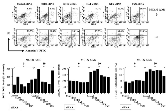 Effects of antioxidant-related siRNAs on cell death, ROS levels and GSH depletion in MG132-treated HPF cells. HPF cells (3–40% confluence) were transfected with either non-target control siRNA or each antioxidant-related siRNA. Two days later, cells were treated with 30 μM MG132 for additional 24 h. (A) Annexin V-FITC and PI cells were measured with a FACStar flow cytometer. The number (%) in each figure indicates Annexin-V-FITC positive cells regardless of PI negative and positive cells. (B and C) Graphs indicate DCF (ROS) levels (%) (B) and DHE (O 2 • ) levels (%) (C) compared with MG132-untreated control siRNA cells. (D) Graph shows the percent of (−) CMF (GSH-depleted) cells.
