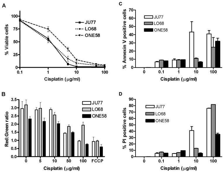 Mechanisms of cisplatin induced cell death in mesothelioma cells. (A) In vitro sensitivity of MM cell lines to cisplatin. Cells were cultured in the presence of cisplatin for 24 h. Cell viability was determined by MTT assay. Data presented are the mean ± SD of five independent experiments each performed in triplicate. (B) Dose-dependent mitochondrial membrane depolarisation. Mitochondrial membrane potential was measured by JC-1 accumulation following cisplatin treatment (lower ratio of red/green indicates loss of potential). Results are the mean ± SD of at least three independent treatments performed in triplicate. FCCP-positive control. (C) Phosphatidylserine (PS) translocation in response to cisplatin. PS translocation to the outer cell membrane was measured by Annexin-V binding and flow cytometry. Cells were treated with a range of cisplatin concentrations (0.1–100 μ g/ml) for 24 h. Results shown are the mean ± SD of two independent experiments performed in triplicate. (D) Loss of membrane integrity in response to cisplatin. Membrane integrity was measured by staining with the cell impermeant dye propidium iodide and flow cytometry. Results shown are the mean ± SD of two independent experiments performed in triplicate.