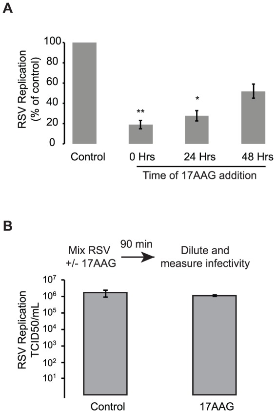 Mechanism of action underlying the antiviral activity of Hsp90 inhibitors against RSV. (A) Hsp90 inhibitors do not act via inhibition of early steps in the RSV cycle, and significantly reduce RSV replication even when added 24 hours post infection. HEp-2 cells were infected with RSV-A2 at an MOI of 1. 17AAG (0.1 µM) was added at 0, 24, or 48 hours post infection and virus production measured 72 hours post infection. Data represents mean and SEM of 4 experiments. (B) The antiviral activity of Hsp90 inhibitors is independent of direct effects on virus infectivity. RSV was incubated with 1 µM 17AAG or DMSO as a control for 90 minutes at 4°C prior to infectivity determination using endpoint titration. Data represent the mean TCID50/mL and SEM of 3 experiments.