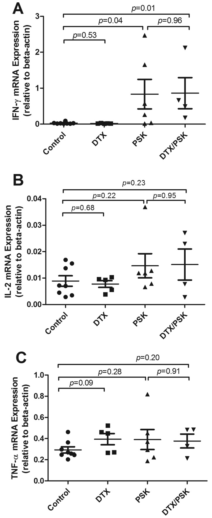 Effects of PSK and docetaxel treatments on mRNA expression of markers of antitumor immune response. Groups of mice (n=8 control; n=5 docetaxel; n= 6 PSK; n=4 PSK + docetaxel) bearing established TRAMP-C2 tumors (12 days) were treated with either oral saline, subtherapeutic dose of docetaxel (5 mg/kg twice weekly), oral gavage of PSK (300 mg/kg), or a combination of docetaxel and PSK. <t>RNA</t> was extracted from isolated tumors and real-time RT-PCR performed using primers and probes for several different cytokines and antitumor immune response markers. Shown are the effects of the different treatment groups on mRNA expression of <t>IFN-γ</t> (A), IL-2 (B), and TNF-α (C). The values shown are relative cytokine mRNA per 1,000 copies of β-actin. Mice treated with PSK, either alone (p=0.04) or with docetaxel (p=0.01) significantly induced IFN-γ mRNA expression in TRAMP-C2 tumors compared to saline control.