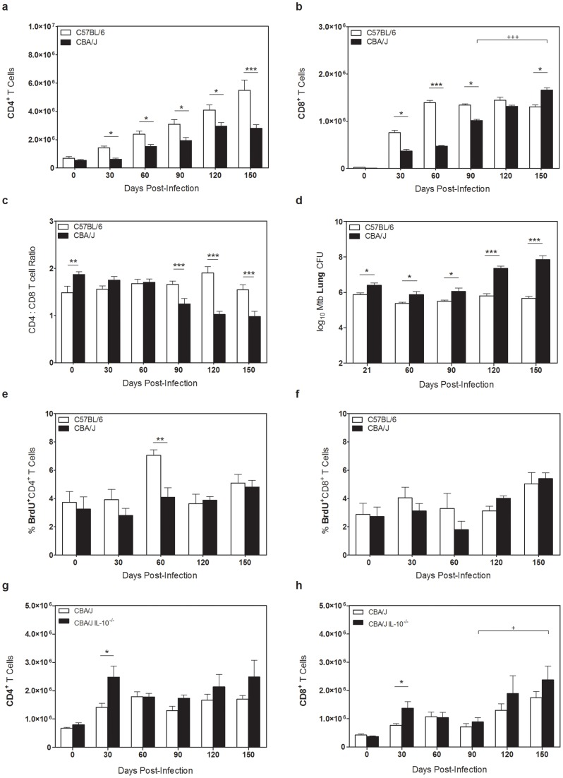 Accumulation and characterization of CBA/J CD8 + T cells. C57BL/6, CBA/J, and CBA/J IL-10 −/− mice were infected with an aerosolized dose of Mtb , and at various times post-infection lungs were removed. ( a, b ) CBA/J and C57BL/6 lung cell were analyzed by flow cytometry for CD4 + and CD8 + T cells. ( c ) Ratio of CBA/J CD4 + to CD8 + T cells representative of four independent experiments with 5 mice per group, per timepoint. ( d ) C57BL/6 and CBA/J lungs were homogenized and plated on 7H11 plates for CFU enumeration. ( e, f ) 24 hr prior to necropsy mice were injected with BrdU, and lung cells were analyzed for expression of BrdU + CD4 + or CD8 + T cells. ( g, h ) Absolute numbers of CD4 + or CD8 + T cells in wild-type or IL-10 −/− CBA/J mice as determined by flow cytometry. Results representative of at least three independent experiments with 5 mice per group, per timepoint. * p