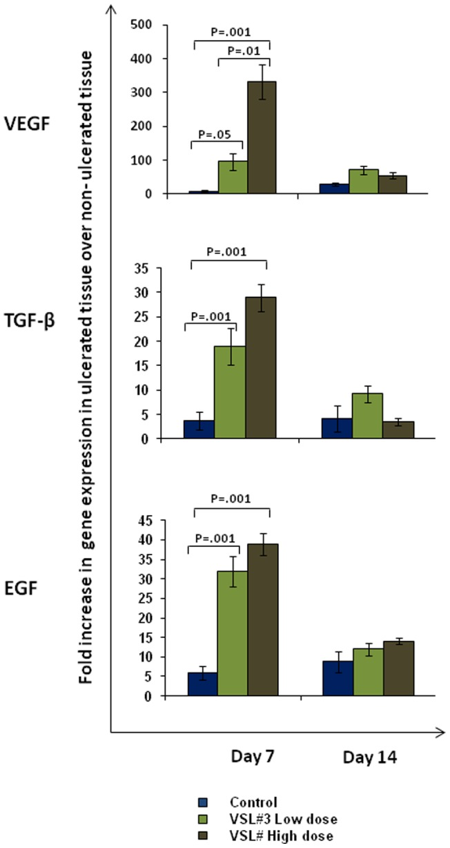 Effect of VSL#3 treatment on gene expression of different growth factors in rats with acetic acid induced gastric ulcers. The relative gene expression levels determined by real time PCR for VEGF [Top], TGF-β [Middle] and EGF [Bottom] using mRNA extracted from control (Blue), VSL#3 low (light green) and high (dark green) dose treated animals on day 7 and day 14 of treatment. Expression levels of all genes were normalized using GAPDH as housekeeping gene. The mRNA expression is graphed as fold change in ulcerated tissue over non-ulcerated tissue. Data shown are the means ± SEM of 6 animals/day. P values for all significant comparison ( p