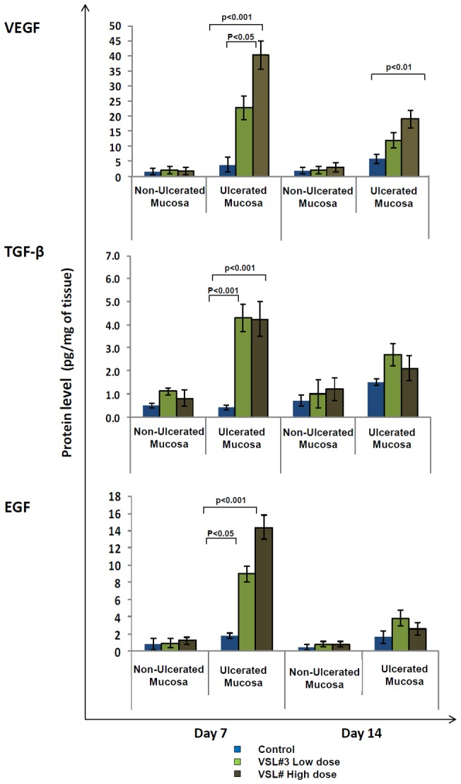 Effect of <t>VSL#3</t> treatment on protein production of different growth factors in rats with acetic acid induced gastric ulcers. Protein levels in tissue homogenates was measured by ELISA for <t>VEGF</t> [Top], TGF-β [Middle] and EGF [Bottom] in control (Blue), VSL#3 low (light green) and high (dark green) dose treated animals on days 7 and 14 of treatment. Protein levels in all groups are represented as pg/mg of tissue. Data shown are the means ± SEM of 6 animals/day. P values for all significant comparison ( p