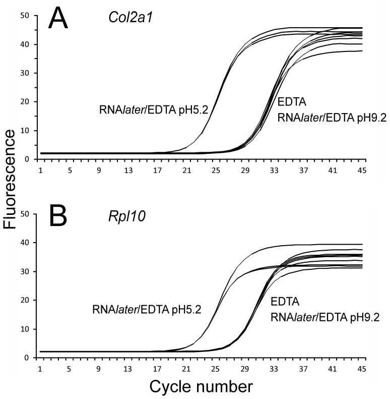 Quantitative <t>PCR.</t> Total RNA extracted from tibiae decalicified with 0.5 M <t>EDTA,</t> RNA later /EDTA at pH 9.2 or RNA later /EDTA at pH5.2 was analyzed for Col2a1 (A) or Rpl10 (B) mRNA transcripts by q PCR using Sybr Green. The machine output (Roche LightCycler 480 II) of fluorescence at each PCR cycle number is shown.