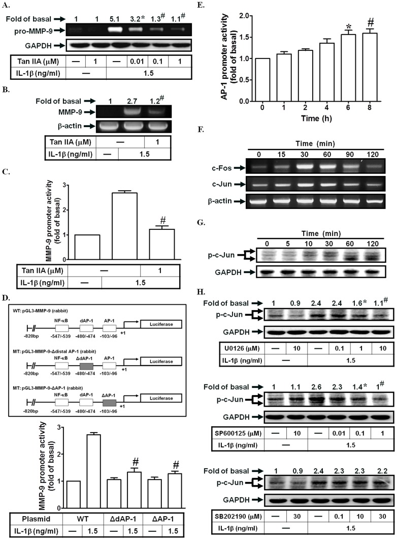 AP-1 is required for IL-1β-induced MMP-9 expression. (A) Cells were pretreated with Tanshinone IIA for 1 h, and then incubated with IL-1β for 12 h. The conditioned media were subjected to determine MMP-9 expression. (B, C) Cells were pretreated with Tanshinone IIA, and then incubated with IL-1β for 4 h (mRNA levels) or 12 h (promoter activity). The mRNA levels and promoter activity of MMP-9 were determined. (D) Cells were transfected with wild-type MMP-9 promoter and AP-1-mutated MMP-9 promoter, and then incubated with IL-1β for 12 h. The promoter activity of MMP-9 was determined. (E) Cells were treated with IL-1β for the indicated time intervals. The AP-1 promoter activity was measured. (F) Cells were treated with IL-1β for the indicated time intervals. The mRNA levels of c-Fos and c-Jun were determined. (G, H) Cells were treated with IL-1β for the indicated time intervals or pretreated with U0126, SP600125, or SB202190, and then treated with IL-1β for 60 min. The levels of c-Jun phosphorylation were analyzed by Western blotting. Data are expressed as mean±S.E.M. of three independent experiments. * P