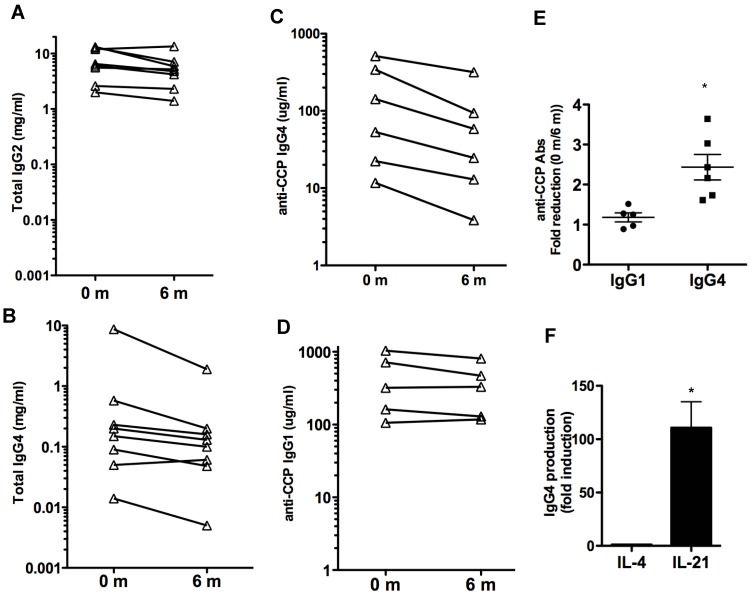 Effect of tocilizumab on IgG isotypes and IgG4 autoantibodies. (A) and (B) Serum levels of total IgG2 ( A ) and IgG4 ( B ) prior to (0 months) and 6 months after the treatment with tocilizumab in the eight patients. ( C ) IgG4-specific anti-CCP Ab levels in serum. Six patients (Patients #1, 2, 4, 5, 6 and 7) had detectable levels of IgG4-anti-CCP Abs in serum prior to the initiation of tocilizumab treatment (0 months). ( D ) IgG1-specific anti-CCP Ab levels in serum. Five patients (Patients #1, 2, 4, 6 and 7) showed detectable levels of IgG1-anti-CCP Abs prior to the treatment. ( E ) Fold reduction in the serum levels of IgG1-specific anti-CCP Abs and IgG4-specific anti-CCP Abs between 0 months (prior to the treatment) and 6 months after the initiation of the treatment. Results of the repeated measures analysis of variance suggest that the fold reduction in IgG1 differs from that observed in IgG4 (p=0.011 for the interaction effect). Follow-up tests of simple effects shows a statistically significant (p =0.011) fold-reduction in IgG4 anti-CCP Abs (denoted by *) while there was no reduction in IgG1 anti-CCP Abs levels (p=0.185). Note that a fold-reduction equal to 1 between 0 months and 6 months means no effect on IgG levels with treatment. ( F ) Purified B cells from healthy volunteers (n=4) were activated in vitro with CD40L-expressing cells in the presence of medium, IL-4 or IL-21. The levels of IgG4 in the supernatants were determined after 6 days. Fold induction for each subject in the levels of IgG4 produced by B cells activated with IL-4 or IL-21 relative to the levels by B cells activated with just medium is shown. The statistically significant difference between fold-induction obtained with IL-21 relative to IL-4 Abs was determined by paired t test analysis, p =0.0206.