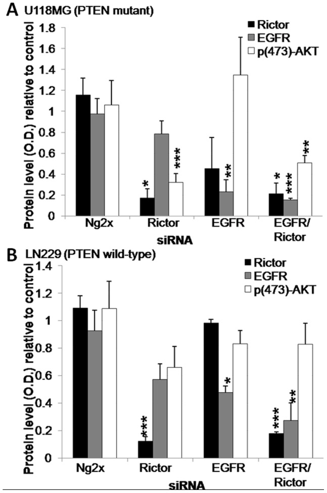 Transfection of siRNA sequences specific to Rictor and EGFR results in downregulation of their respective proteins in U118MG and LN229 GBM lines. Histograms showing Rictor, p(473)AKT, AKT and β-actin protein levels relative to untreated cells. Optical density values were normalized to the β-actin value, and the AKT value in the case of p(473)AKT, and represent the average obtained from three independent experiments from a ) U118MG and b ) LN229 cells 96 hrs after transfection of siRNA against Rictor, EGFR, the combination of Rictor and EGFR siRNAs or the combination of two negative control sequences (Ng2x). *p-value ≤0.05; **p-value ≤0.01; ***p-value ≤0.001.
