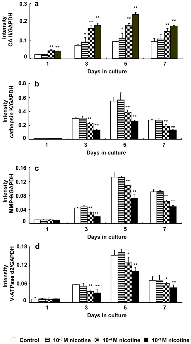 Effect of nicotine on mRNA expression of CA II, cathepsin K, MMP-9, and V-ATPase d2. RAW264.7 cells were cultured in differentiation medium with 0 (control), 10 −5 , 10 −4 , or 10 −3 M nicotine for up to 7 days. The mRNA expression of CA II (a), cathepsin K (b), MMP-9 (c), and V-ATPase d2 (d) was determined using real-time PCR on days 1, 3, 5, and 7 of culture. Data are shown as the mean±S.D., n = 3 independent experiments. *p