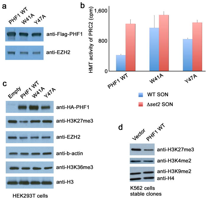 Recognition of H3K36me3 by PHF1 inhibits PRC2 methyltransferase activity. ( a ) Western analysis of wild type and mutated Flag-PHF1 and EZH2 in the PRC2 complexes. ( b ) HMT assays with PHF1-PRC2 complexes purified from HEK293T cells on native wild type chromatin (wt SON, blue) and chromatin lacking the H3K36me mark (Δ set2 SON, red). Error bars represent SD based on three experiments. ( c ) Western analysis of whole cell extract from HEK293T cells 48 hours after transfection with wild type HA-PHF1 or W41A or Y47A mutants. Empty vector is control. (d) Western analysis of K562 cells stably expressing Flag-PHF1.