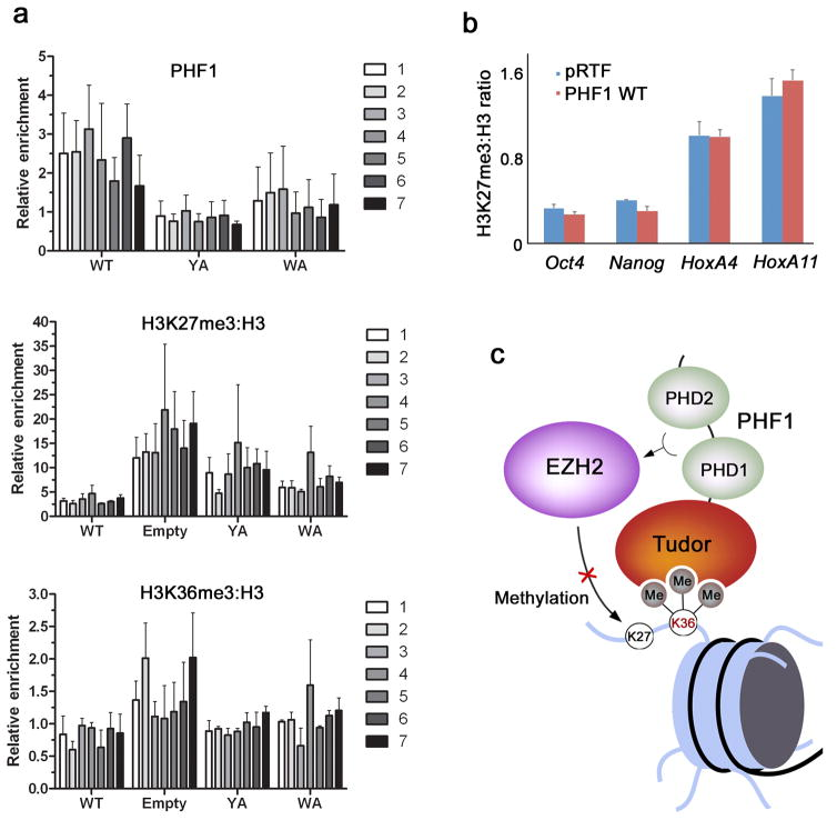Binding of PHF1 to H3K36me3 decreases PRC2-mediated deposition of H3K27me3. ( a ) ChIP assays on chromatin from HEK293T cells fixed and harvested 48 hours after transfection with either empty vector, wild-type HA-PHF1 or W41A or Y47A mutants. The levels of HA-PHF1, H3K27me3, H3K36me3 and H3 were probed across the MYT1 promoter using 7 primer sets. The top panel shows occupancy of wild type and mutant HA-PHF1 and the bottom two panels show H3K27me3 and H3K36me3 levels normalized to H3 (H3K27me3:H3). All data are relative to the PCLB4 non-target control gene. Error bars represent SD based on three experiments. ( b ) ChIP assays on chromatin harvested from mouse ES cells transduced with empty vector (pRTF, blue) or vector containing Flag-PHF1 (PHF1, red). Using quantitative PCR (qPCR), the levels of H3K27me3 and H3 were probed at the Oct4 , Nanog , HoxA4 and HoxA11 promoters. Data are presented as the ratio of H3K27me3 to total H3 signal to correct for possible differences in nucleosome density at the different loci examined. Error bars represent SD based on two experiments. ( c ) A model for inhibition of EZH2-PRC2 activity through recognition of H3K36me3 by the Tudor domain of PHF1.