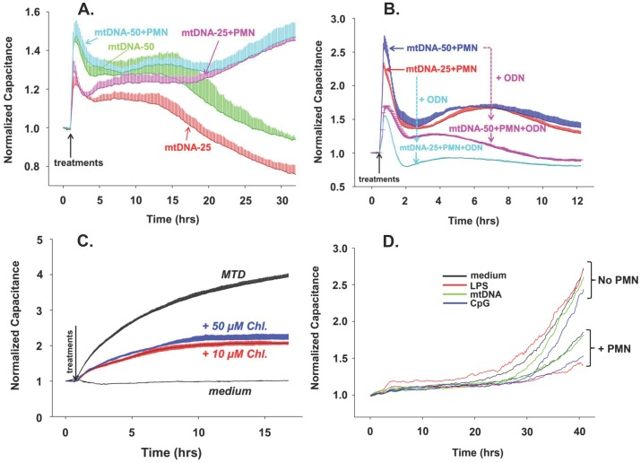 mtDNA and MTD induce permeability in EA calls. (A) mtDNA-induced endothelial permeability changes were evaluated by ECIS as described in Figure 1 . EA cells were seeded onto ECIS cultureware and 25 or 50 µg/mL mtDNA was applied with or without 2–3×10 5 human PMN. (B) In addition to the conditions in 2A, 5 µM ODN TTAGGG (a specific inhibitor of TLR9) was applied to chambers where indicated. Two or three wells were used per reaction, mean and SD values are shown. (C) EA cells were pre-treated with 10 or 50 µM Chloroquine then MTD (×1/25) were applied. Two or three wells are used per reaction, mean and SD values are shown. For 2A, B and C the conditions were the same as described in Figure 1 . All experiments were repeated at least three times. (D) Unlike EA or HPAEC, HMVEC have very slow and limited responses to stimulation.