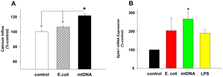 "mtDNA increases SOCE and expression of Sphk1 in PMN. (A) Human PMN were treated with 20 µg/mL of E.coli DNA or mtDNA for 60 min then loaded with fura-2. Thapsigargin (1 µM) was applied to under nominally calcium-free conditions and then 1.8 mM extracellular calcium was applied at the indicated times. Calcium influx was calculated as described elsewhere [9] as the area under the curve for [Ca 2+ ] i (AUC) over 120 sec. Data were analyzed using medium-treated PMN as 100%. Mean and SE values are shown. At least 3 experiment were done per condition. * denotes a significant difference by student t-test (SigmaPlot 11) compared to time ""0"" value. Experiments were repeated at least three times. (7B) Freshly isolated human PMN (5 million cells in 2 mL) were incubated with medium, mtDNA (10 µg/mL), E.coli DNA (10 µg/mL), or LPS (100 ng/mL) for 60 min. Then RNA and cDNA were prepared using the RNesay mini kit (Qiagen) and SuperScript VILO cDNA Synthesis kit (Life technologies), respectively. 200 ng of cDNA per reaction was used for TaqMan qPCR assay for Sphk1 and GAPDH to evaluate expression levels. Sphk1 expression levels were then further normalized by GAPDH using the medium control result as 100%. Four different PMN preparations were used for stimulation and qPCR assays were done in triplicates. Mean and SE values from four different experiments are shown. Data were analyzed by One Way ANOVA. * denotes a significant difference between mtDNA treatment and the medium control (p"