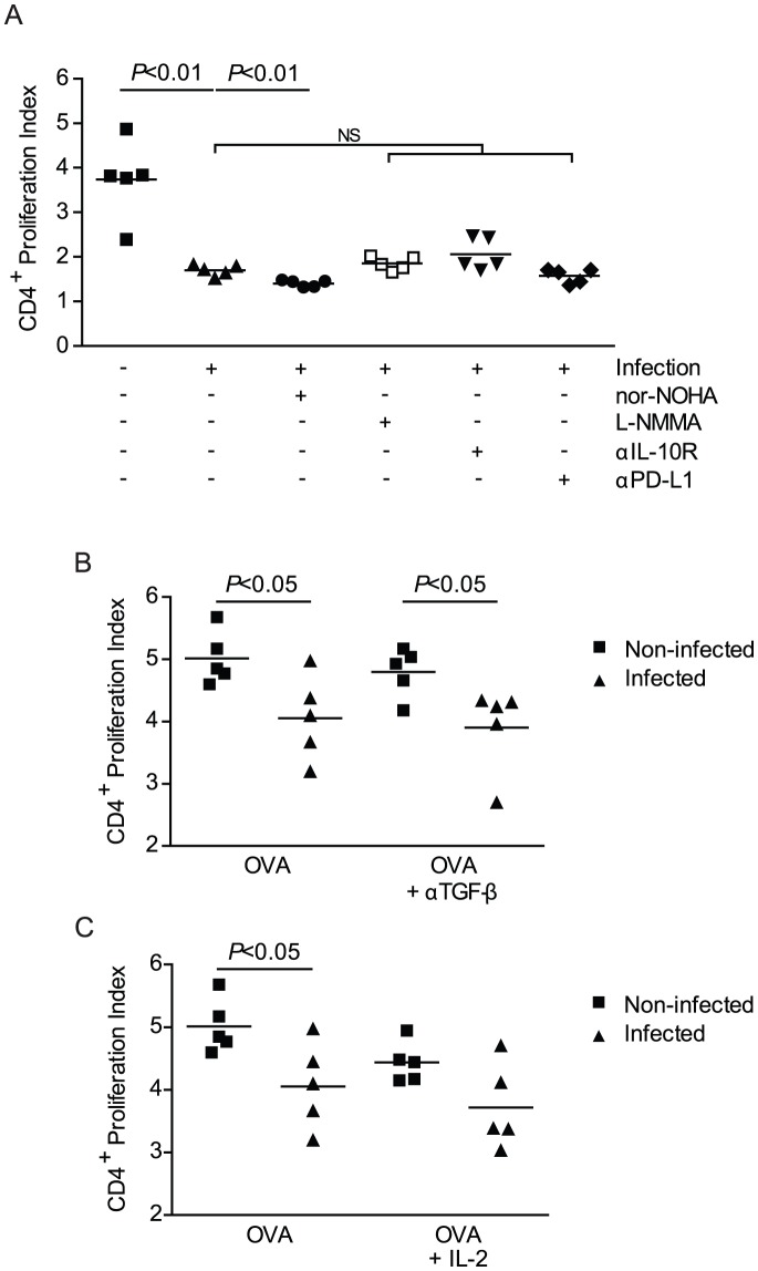Impairment of T cell stimulation by pre-patent schistosome infection is independent of arginase, NOS, IL-10, PD-L1 and TGF-β. A, Splenocytes isolated from 4 week S. mansoni -infected or non-infected RAG-1 −/− mice co-cultured with CFSE-stained CD4 + T cells isolated from non-infected OT-II/RAG-1 −/− mice for 72 hrs with OVA peptide stimulation in the presence of Nor-NOHA, L-NMMA, anti-IL-10R or anti-PD-L1. Cells recovered from culture were stained for surface markers then analyzed for CD4 + T cell proliferation by flow cytometry. Proliferation Index was calculated. Horizontal bars represent mean of 5 independent mice. B, In a replicate, independent experiment, cells were isolated as in (A) and cultured in the presence of OVA peptide stimulation with anti-TGF-β1, β2, β3 antibody (B) or recombinant IL-2 (C) and. CD4 + T cell proliferation was analyzed by flow cytometry. Horizontal bars represent mean of 5 independent mice. Data are representative of at least 3 independent experiments. Nor-NOHA, N ω -hydroxy-nor-Arginine; L-NMMA, L-N G -monomethyl Arginine citrate; αIL-10R, anti-IL-10 receptor monoclonal antibody; αPD-L1, anti-PD-L1 monoclonal antibody; αTGF-β, anti-TGF-β1, β2, β3 monoclonal antibody.