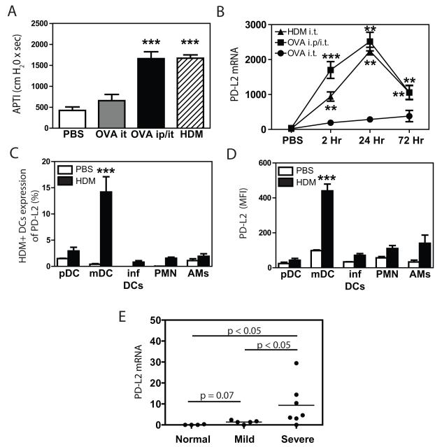 PD-L2 expression is enhanced in the airways of asthmatic individuals and allergen-exposed mice Mice were treated with PBS (PBS - intratracheally on days 0, and 14), intratracheal OVA (OVA i.t. - 100 μg on days 0, 14 and 21), intraperitoneal/intratracheal OVA (OVA i.p./i.t. - 10 μg OVA i.p. on day 0 followed by 100 μg i.t. on days 14 and 21), or intratracheal HDM (HDM - 100 μg on days 0 and 14). (A) Mice were sacrificed 72 hours after final allergen exposure to measure AHR via the airway pressure time index (APTI) method. (B) PD-L2 expression (normalized to mouse ribosomal protein s14) was measured by RT-PCR. n = 4 mice per group. 1 representative experiment of 2 shown. Mean + SEM shown. *** and ** indicate p
