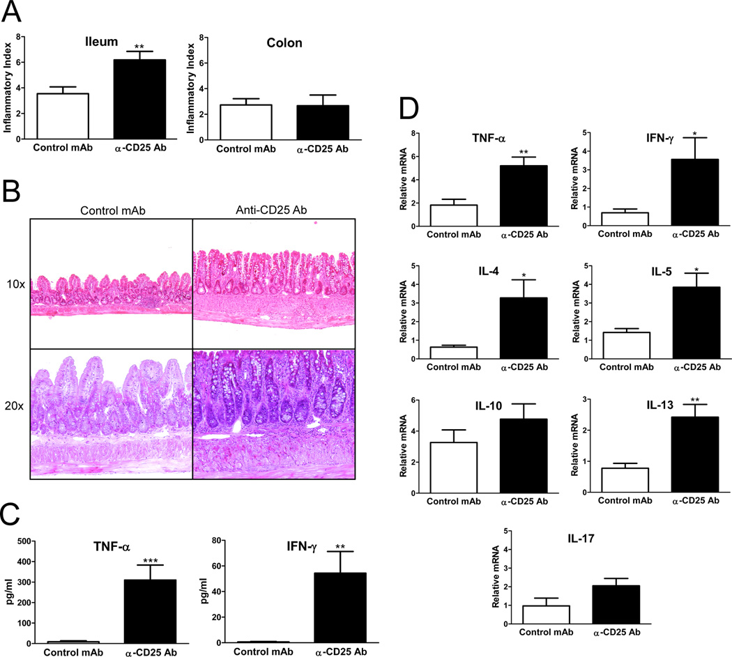 Anti-CD25 Ab treatment increases the severity of spontaneous ileitis in SAMP mice, and increases ileal expression of Th1 and Th2 cytokines (A) Anti-CD25 treated mice developed more severe ileitis with a higher mean total inflammatory score compared with control mAb treated mice; no significant colitis was detected in either group (n=11/group). (B) Representative photomicrographs of H E stained sections, 10× and 20× original magnification. SAMP mice treated with isotype control Ab display minimal inflammatory changes with preservation of the villi morphology; anti-CD25 treated SAMP show increased infiltration of inflammatory cells and villous distortion. (C) Serum TNF-α and IFN-γ levels measured by ELISA were elevated in anti-CD25 treated SAMP mice compared to controls (n=6/group). (D) Total RNA was extracted from ileal tissues from anti-CD25 Ab or isotype control Ab treated SAMP mice, and mRNA was quantified by real-time RT-PCR. Both Th1 and Th2 cytokines were significantly increased in anti-CD25 treated mice. Data are expressed as the mean ± SEM (* P