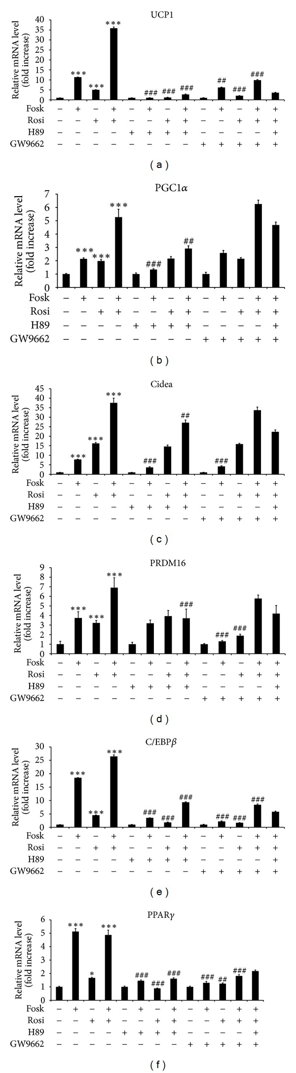 The effect of forskolin and rosiglitazone on mRNA expression of (a) UCP1, (b) PGC1 α , (c) Cidea, (d) PRDM16, (e) C/EBP β , and (f) PPAR γ is mediated by PKA and PPAR γ dependent pathways. HIB-1B cells were grown to confluence and then treated with H89 (10 μ M) for 1 hour or GW9662 (30 μ M) for 3 hours prior to and during addition of rosiglitazone (Rosi) (10 μ M) for 24 hours, or forskolin (Fosk) (10 μ M) for the final 3 hours of rosiglitazone treatment, before RNA extraction, as indicated. All drugs were added in serum-free medium. Controls were treated with DMSO. Gene expression levels were analysed by quantitative real-time PCR and normalized against 36B4 expression. Error bar means the mean ± SEM of triplicate observations within a single experiment performed in triplicate. *** Significant difference P