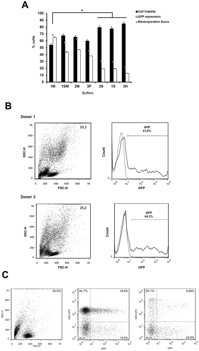 Electroporation efficiency of different buffers in primary human T lymphocytes. ( A ) PBMCs from two healthy donors were electroporated using in house buffers and 4 µg of pT2-GFP plasmid. Cell viability and GFP expression were analyzed after 24h by flow cytometry. Cell viability is normalized to control (not electroporated) cells. Electroporation scores were determined as described in materials and methods . Values are the average of two donors in triplicate and are expressed as mean±SEM. Statistical analysis was performed using One Way ANOVA and Tukey post test (* = P