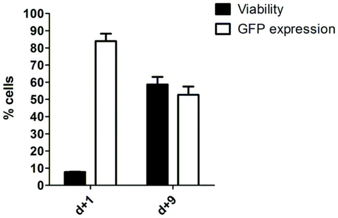 Electroporation of transposon and transposase maintains transgene expression after cell viability recovery. PBMCs from two healthy donors were electroporated using 1SM buffer, 20 µg of pT2-GFP plasmid and 2 µg of SB100x transposase. Cell viability and GFP expression were analyzed by flow cytometry on day 1 and 9. Values are the average of two donors in triplicate and are expressed as mean±SEM.