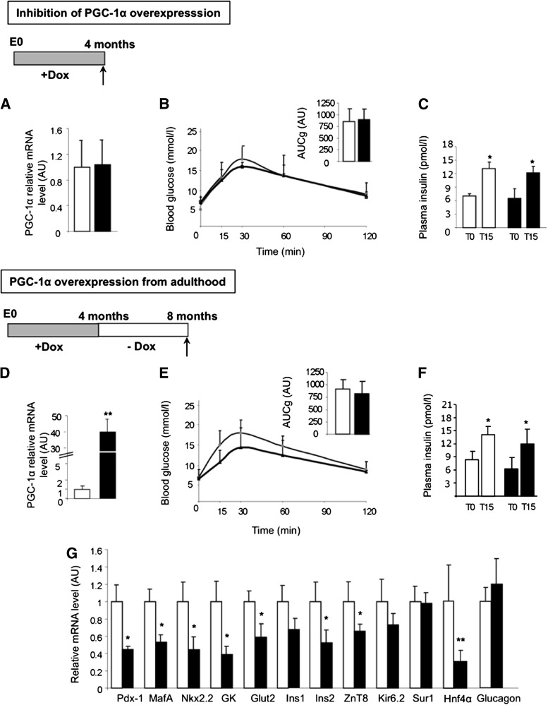 PGC-1α overexpression from adult age does not alter insulin secretion. A : PGC-1α expression in islets of 4-month-old control (white bars) and Ins-PGC-1α (black bars) mice after Dox treatment from conception. B : IpGTT performed on Ins-PGC-1α (black triangles) and control (white circles) mice. Inset shows the area under the curve for 0–120 min (AUC 0–120 min ) of plasma glucose of these mice. C : Serum insulin levels before and 15 min after intraperitoneal glucose in control (white bars) and Ins-PGC-1α (black bars) mice. D : PGC-1α expression in islets of control (white bars) and Ins-PGC-1α (black bars) mice 4 months after stopping Dox treatment. E and F : IpGTT and GSIS in Ins-PGC-1α (black triangles) and control (white circles) mice. Inset shows AUC 0–120 min of plasma glucose of these mice. G : Islet gene expression in islets of control (white bars) and Ins-PGC-1α (black bars) mice 4 months after stopping Dox treatment. All values are means ± SD. * P