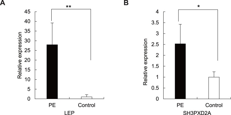 Validation the mRNA expression of LEP and SH3PXD2A in preeclamptic (n = 7) versus normal (n = 6) placentas. (A) Expression of LEP mRNA measured by qRT-PCR. The difference between preeclamptic placentas and normal controls is highly significant ( p = 0.003). ** p