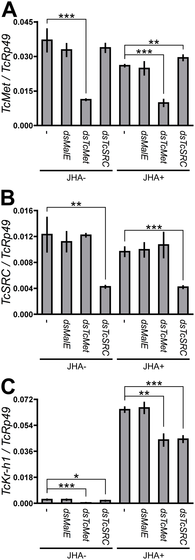Effects of RNAi-mediated knockdown of TcMet and TcSRC on the JH-dependent induction of TcKr-h1 in Tc81 cells. Cells were soaked in 50 ng/μL dsRNA for MalE , TcMet , or TcSRC for 60 h. Control cells (−) were not treated with dsRNA. Cells were then incubated in media containing 10 μM JHA (JHA+) or JHA-free media (JHA-) for 2 h, and TcMet (A), TcSRC (B), and TcKr-h1 (C) transcript levels were determined by qPCR (mean ± SD, n = 3). Data were analyzed using Student's t -tests (*** P