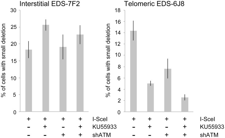 The effect of ATM deficiency on small deletions at interstitial and telomeric DSBs. The frequency of small deletions in genomic <t>DNA</t> from clones EDS-7F2 and EDS-6J8 that were infected with pQCXIH-ISceI and selected with hygromycin for 14 days was determined by first performing <t>PCR</t> using oligonucleotide primers spanning one of the I- Sce I sites in the pEJ5-GFP plasmid (see Figure 1 ). The fraction of cells in the population that contain small deletions at the I- Sce I site was then determined from the fraction of the PCR product that was not digested with I- Sce I (see Materials and Methods ). All samples were analyzed in triplicate. Error bars represent standard deviation of three separate experiments.