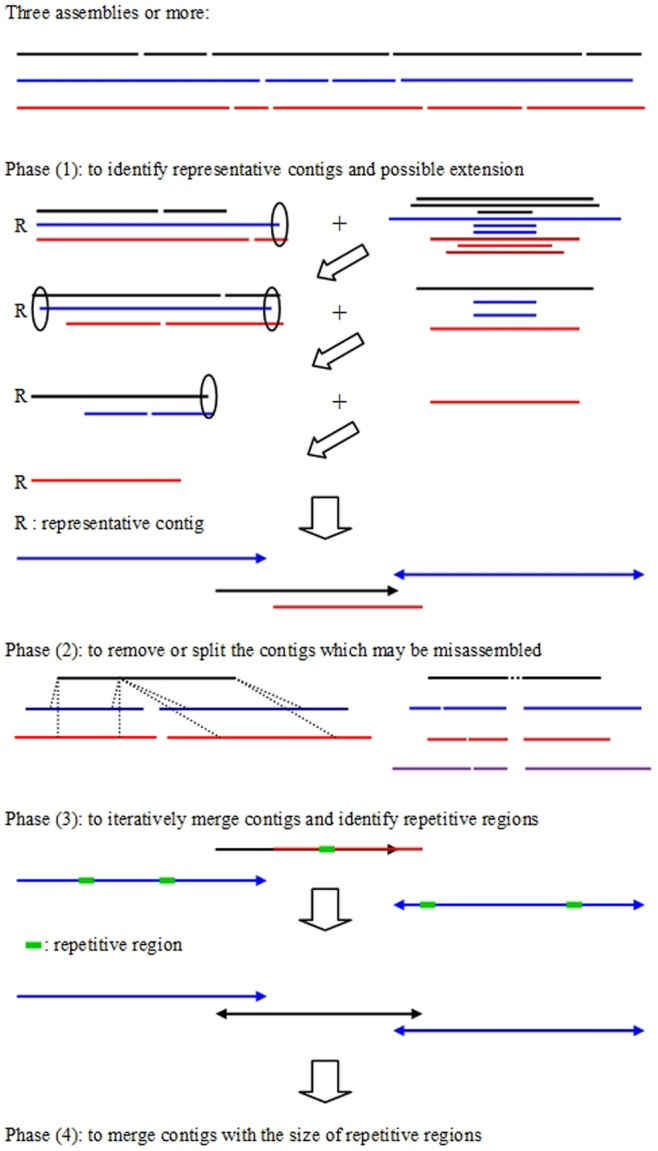 A schematic overview of CISA. Phase (1): employing the largest contig as a representative contig and identifying the contigs which were aligned to the ends of the representative contig with more than 80% alignment to perform possible extension (hollow ellipses and solid arrows represent before and after extension, respectively). Phase (2): removing and splitting misassembled contigs. Two misassembled contigs are shown in black. The left element represents a misjoined error because it was assembled in two different contigs in two individual assemblies (blue and red); the right element represents an insertion error (dot), which was never seen in other assemblies. Phase (3): iteratively merging contigs with a proper end-to-end overlap and estimating the size of repetitive regions. Phase (4): merging two contigs with a small overlap greater than the maximum size of repetitive regions.