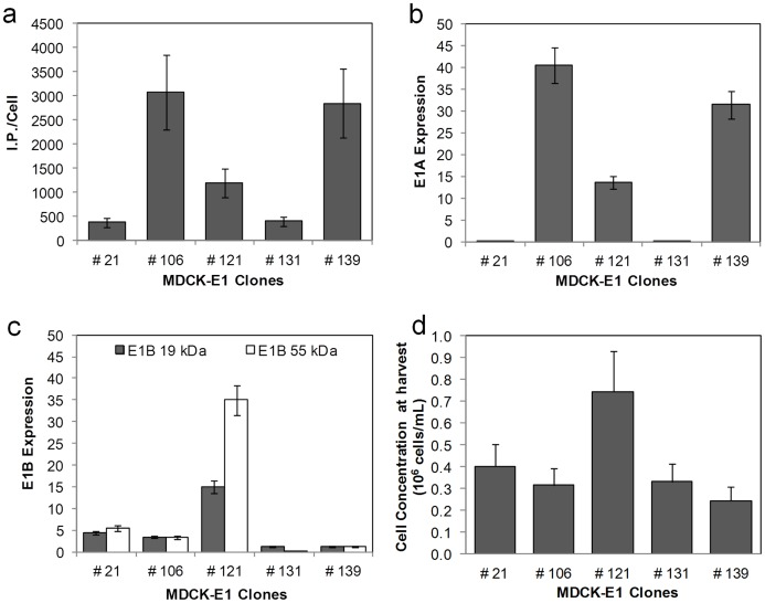 Cell specific productivity and corresponding E1 gene expression of MDCK-E1 cell clones. a. Cell specific infectious viral titer produced in MDCK-E1 clones using DMEM 10% (v/v) FBS and 1% (v/v) NEAA. Error bars represent a 25% inter-assay variability error. b and c. Levels of mRNA E1A ( b ) and E1B expression ( c ) obtained for the different MDCK-E1 clones. The gene expression was determined by Real Time reverse transcriptase PCR and normalized to the housekeeping gene (GAPDH). Error bars represent a 10% variability error associated with the method. d. Cell concentration obtained for the different MDCK-E1 clones at virus harvest time. Cells were infected at the same cell concentration. Error bars represent the standard deviation of three independent experiments (n = 3).