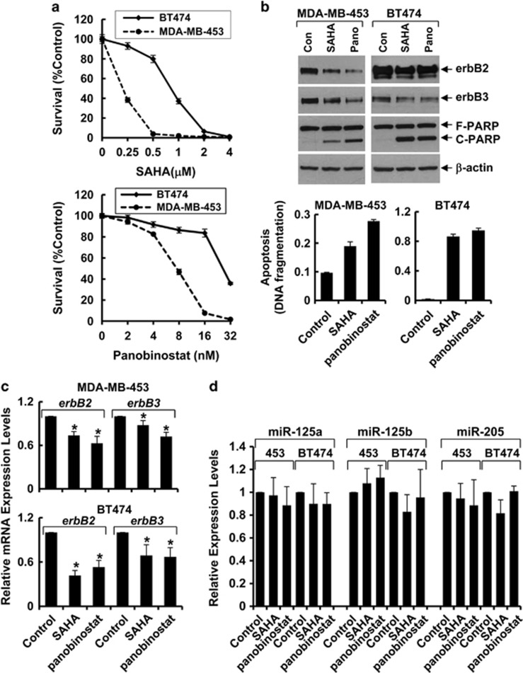 SAHA and panobinostat inhibit proliferation and induce apoptosis in erbB2-overexpressing breast cancer cells associated with the reduction of mRNA levels and protein expression of erbB2/erbB3 . ( a ) MDA-MB-453 or BT474 cells were plated onto 96-well plates. After 24 h incubation, cells were grown in either control medium, or the same medium containing indicated concentrations of SAHA or panobinostat for another 72 h. The percentages of surviving cells relative to controls, defined as 100% survival, were determined by reduction of MTS. Bars, S.D. The data are representative of three independent experiments. ( b ) MDA-MB-453 cells were treated with SAHA (300 nmol/l) or panobinostat (8 nmol/l) for 24 h. BT474 cells were treated with SAHA (1.5 μ mol/l) or panobinostat (20 nmol/l) for 24 h. All cells were collected and subjected to western blot analyses with specific antibody directed against erbB2, erbB3, PARP, or β -actin (top) and a specific apoptotic ELISA (bottom). Bars, S.D. The data are representative of three independent experiments. ( c ) MDA-MB-453 or BT474 cells were treated as described in ( b ) for 16 h. All cells were collected and subjected to total RNA extraction. First-strand cDNA was synthesized using a reverse transcription kit from Applied Biosystems. The mRNA levels of erbB2 and erbB3 were measured by qRT-PCR. Bars, S.D. The data are representative of three independent experiments. * P