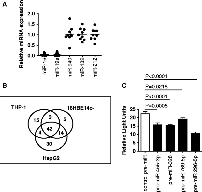 miRNA expression profiling and testing of AAT mRNA- and cell-specific miRNAs. ( A ) Relative miRNA expression in AAT mRNA captured samples was quantified using the 2 −ΔΔCt method. Assays were performed in triplicate ( n = 3). ( B ) Numbers of miRNAs interacting with AAT mRNA in THP-1, 16HBE14o− and HepG2 cells using NanoString Technologies miRNA Expression Kit. ( C ) Relative luciferase activity was measured in HEK293 cells (1 × 10 5 in triplicate) transiently transfected with pMIR-AAT-3′UTR and pRLSV40 and co-transfected with synthetic pre-miRs as indicated. Firefly luciferase activity was normalized to the Renilla luciferase activity. Data are represented as mean ± SEM and were compared by t -test for negative control pre-miR versus pre-miR; data are representative of three experiments.