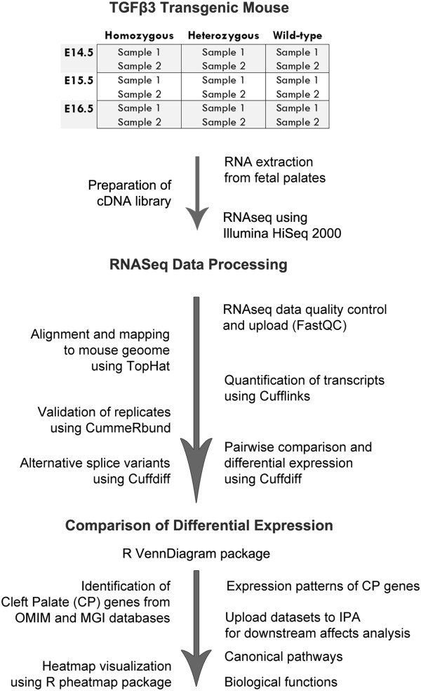 Experimental workflow of the study. RNA samples were extracted from mouse palatal tissues of TGFβ3 knockout mice (homozygous, heterozygous, and wildtype) at three developmental stages (E14.5, E15.5, and E16.5); libraries were prepared, converted to cDNA, and sequenced by using the Illumina <t>HiSeq2000</t> next generation sequencer. Fastq files were uploaded to the server for quality control analysis of sequence reads using FastQC. There were no sequence manipulation processes performed for any fastq file, given that the quality score was high at both the 3 ′ and 5 ′ ends. All of the reads were mapped to the reference genome (mm9, built name NCBIM37) by using TopHat. Quantification of transcripts, statistics tests for differential expression, and detection of splice variants were performed using Cufflinks; quality assessments of biological and technical replicates were performed using CummeRbund; and pairwise comparisons of samples and differential expression of transcripts were analyzed using CuffDiff. Venn diagrams of all significantly altered (FC ≥ 2.0) transcripts were drawn using the R VennDiagram package [ 75 ]. CP related genes (n = 322) were extracted from human (OMIM) and mouse (MGI) genome databases. CP genes were classified based on their patterns of expression (n = 9) for each genotype and their heatmaps were generated using the R pheatmap package. Expression pattern groups of CP genes were uploaded to IPA software as datasets and core analyses were run to detect downstream effects: canonical pathways and biological functions relevant to sample datasets.