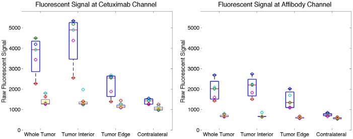 Comparison of raw fluorescent signals. Raw fluorescent signals from various regions shown at both cetuximab channel (left) and Affibody channel (right) using box and whisker plots. Signal from injected animals are offset to the left while those from non-injected control animals are offset to the right with boxes shaded. The central lines are the medians, the edges of the boxes are the 25th and 75th percentiles and individual data points are plotted as open circles.