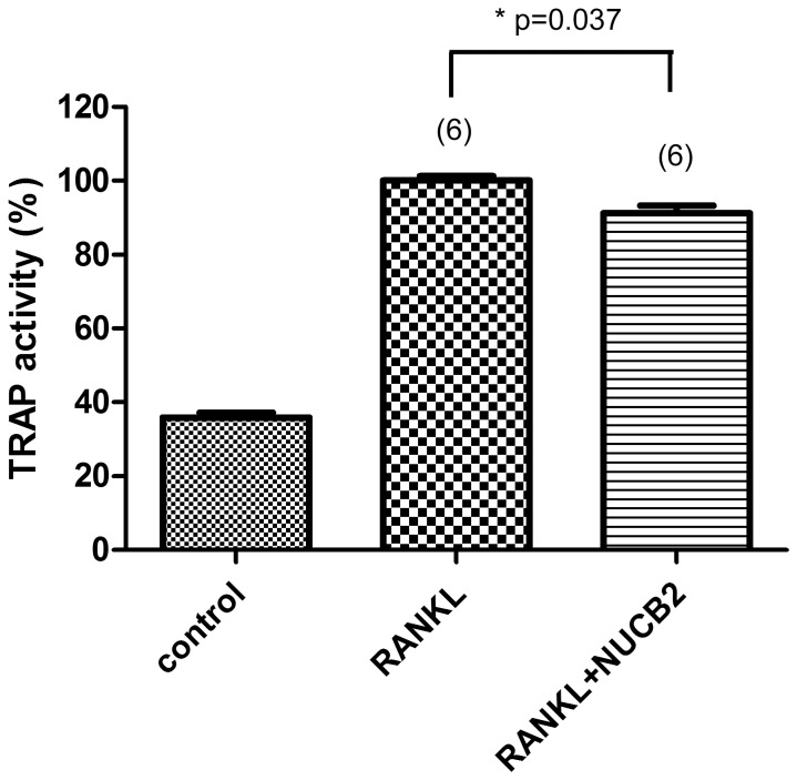 The effect of NUCB2 1–83 on osteoclast differentiation quantified by measuring TRAP activity. RAW 264.7 cells were cultured in the presence of RANKL (50 ng/mL) for 5 days with or without NUCB2 1–83. The cells were fixed and incubated in 10 mM citrate buffer (pH 4.6) containing 10 mM sodium tratrate and 5 mM p-nitrophenylphosphate for 1 h followed by transferring into new well plates containing an equal volume of 0.1 N NaOH. TRAP activity was measured at λ = 405 nm and expressed as percent of that of untreated control. Data represented the mean±SEM(*P
