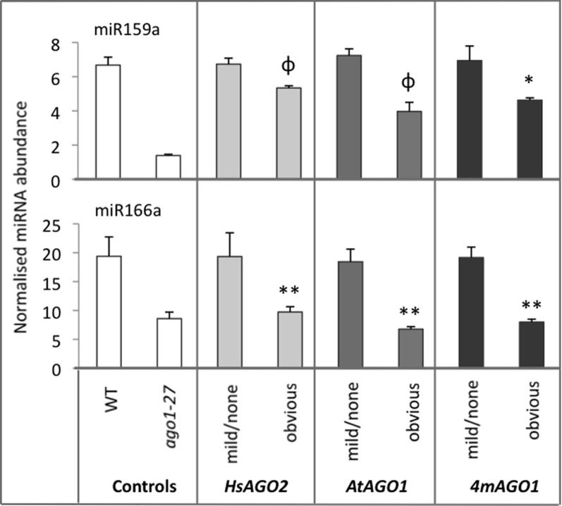 miRNA abundances decrease in AGO overexpressing plants. The abundances of miR159a and miR166 were measured in total RNA from sample pools composed of 4–8 transformants, 24-days old, from each morphological category for each construct. Wild type (WT) and ago1–27 plants, grown in parallel, were included as controls. miRNA levels are normalized to the small RNA sno101. Data is averaged from two technical cDNA replicates, each of which comprised triplicate measurements, and error bars depict standard error of the mean. Values marked with * are significantly smaller ( P