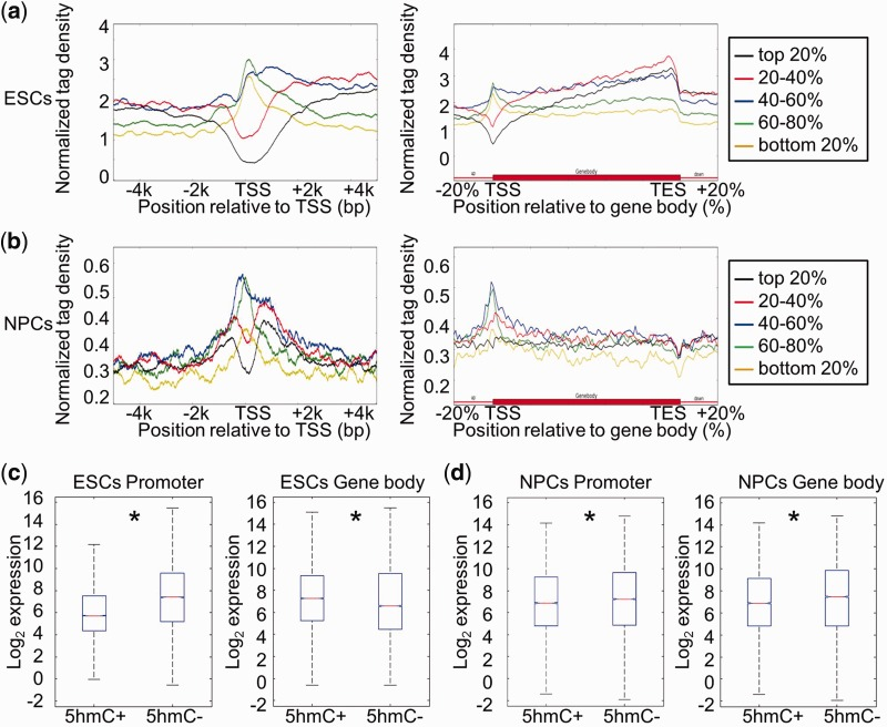 Correlation between DNA hydroxymethylation and gene expression in ESCs and NPCs. ( a ) Genes were separated into five groups (from high to low) according to their expression levels in ESCs: top 20%; 20–40%; 40–60%; 60–80%; bottom 20%. The average 5hmC densities of the five groups of genes were plotted across the promoter or gene body regions. Left: TSS ± 5 kb regions. Right: gene body regions. ( b ) Genes were also separated into five groups according to their expression levels in NPCs. The average 5hmC densities of the five groups of genes were plotted across the promoter or gene body regions. Left: TSS ± 5 kb regions. Right: gene body regions. ( c ) Genes were classified into two groups with respect to the presence (5hmC+) or absence (5hmC−) of 5hmC peak(s) at their promoters (TSS ± 1 kb) or in gene body regions (from TSS + 1 kb to TES) in ESCs. Gene expression levels were compared between '5hmC+' and '5hmC−' groups. Left: promoter, P = 0; Right: gene body region, P = 1.08358e-13. * P