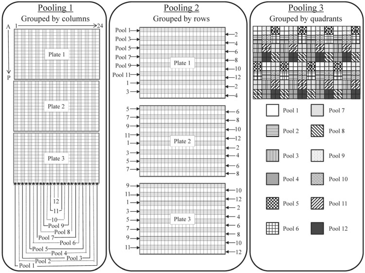 Pooling scheme for sequencing experiment 2. We selected 96 samples across three 384-well plates based on their position on the plate, such that each sample was present in exactly 3 of the 72 pools and majority of the samples can be uniquely identified based on the pattern of positive pools. For the first 24 pools, samples in the same columns were combined. For the next 24 pools, samples in the same rows were combined. Lastly, samples in the same well position across plates were combined into a total of 24 pools. This pooling scheme resulted in a total of 72 pools that can be sequenced in six lanes on Illumina Genome Analyzer IIx platform.