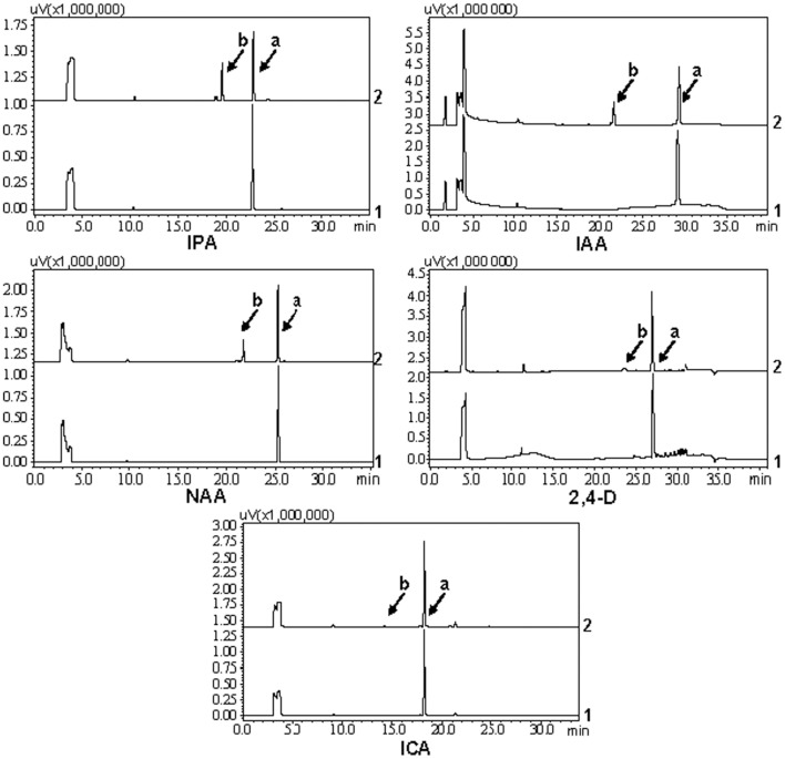 """HPLC analysis of reaction products from other auxins. 1: the reaction was added with GST protein as control. 2: the reaction was added with UGT74D1 fusion protein. Peak """"a"""" represents the auxin substrates. Peak """"b"""" represents the reaction products."""