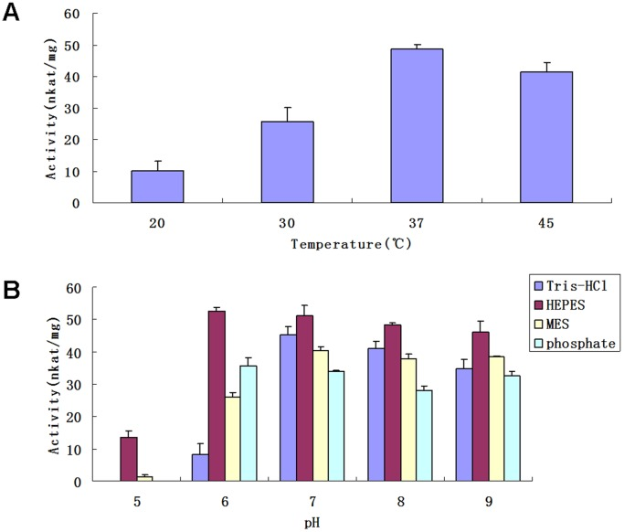 """Analyses on factors affecting the activity of recombinant UGT74D1. (A) The effects of temperature. (B) The effects of buffer and pH value. All the reaction mix (100 µl) contained 0.2 ug of recombinant UGT74D1, 5 mM UDP-glucose, 1 mM IBA, 2.5 mM MgSO 4 , 10 mM KCl, 14.4 mM 2-mercaptoethanol, 50 mM buffer and was incubated for 30 min as described in """"Materials and Methods """". The results represent means±SD from three replicates. The specific enzyme activity was defined as nmol of substrates converted into glucose conjugates per second (nanokatal, nkat) by 1 mg of protein."""