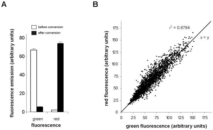 Values of green and red signal intensities in transversal plasma membranes containing PIN2-Dendra2. ( A ) Means of green and red membrane fluorescence intensities examined before and after photoconversion in arbitrary unites. The graph summarize the results obtained in the course of the whole study (with 330 roots 20 to 25 membranes per root were analyzed). ( B ) Values of green signal intensities emitted by the membranes before photoconversion were plotted against the values of red signal intensities emitted by the same membranes after 15 s' photoconversion. The graph shows the results from a total of 2500 membranes from 100 roots used in the course of study.